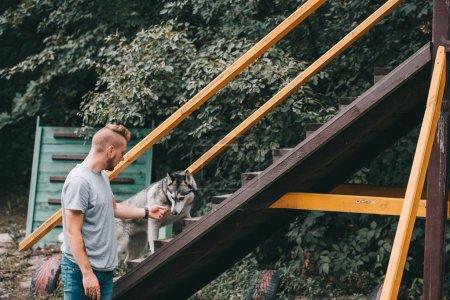 Photo pour Cynologist formation avec chien husky sibérien sur obstacle escaliers en agilité du procès - image libre de droit