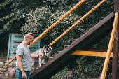 cynologist training with siberian husky dog on stairs obstacle in agility trial