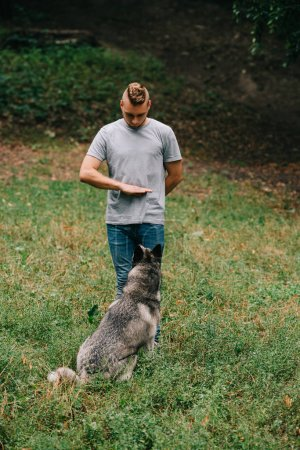 man and husky dog training stand command with hand gesture
