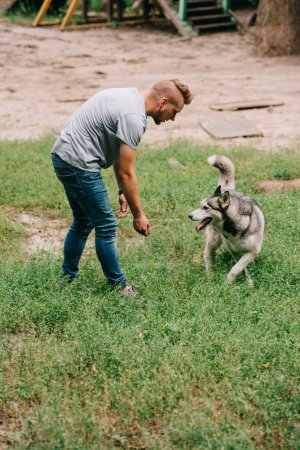 man training obedience with siberian husky dog