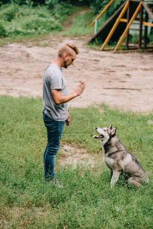 cynologist gesturing and training sit command with husky dog