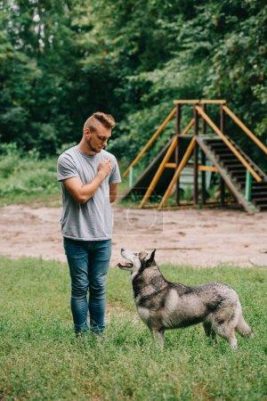 cynologist training obedience with siberian husky dog