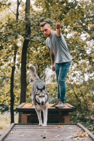 young cynologist with jumping husky on obstacle in park