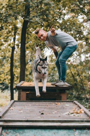 dog trainer with jumping husky on obstacle