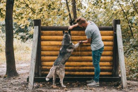entrenamiento cinnólogo con perro husky en salto obstáculo en la prueba de agilidad