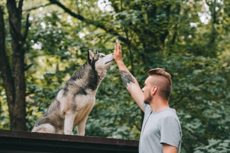 cynologist training with obedient husky dog
