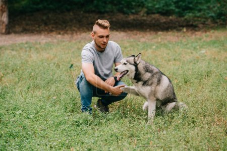 cynologist playing with siberian husky dog in park