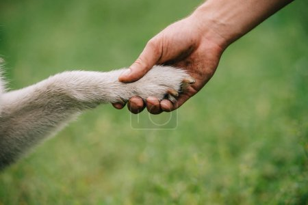 cropped view of man holding paw of dog, friendship concept