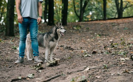 cropped view of man walking with siberian husky dog in forest