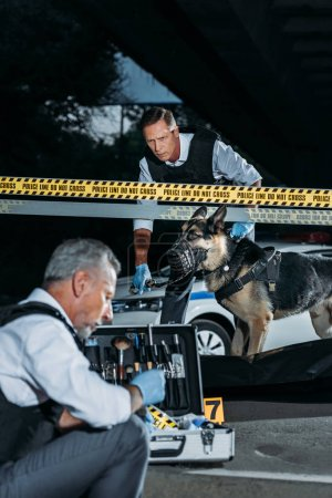 mature policeman sitting with case for investigation tools while his colleague with alsatian on leash standing near corpse in body bag at crime scene