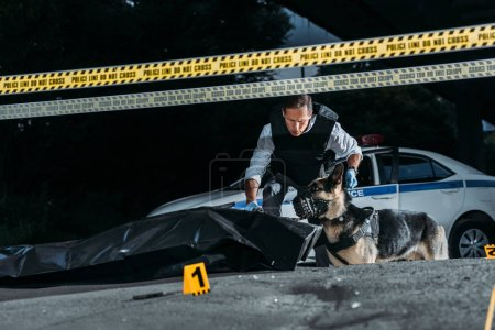 policeman holding german shepherd on leash at crime scene with corpse in body bag