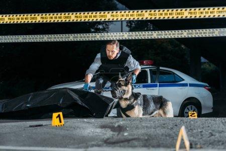Photo pour Policier d'âge moyen tenant berger allemand en laisse sur la scène de crime avec cadavre dans le sac de corps - image libre de droit