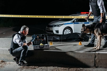 Photo for Mature policeman putting on latex gloves near case for investigation tools while his colleague standing near with dog on leash at crime scene with corpse - Royalty Free Image
