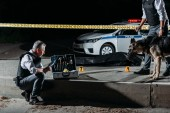 mature policeman putting on latex gloves near case for investigation tools while his colleague standing near with dog on leash at crime scene with corpse