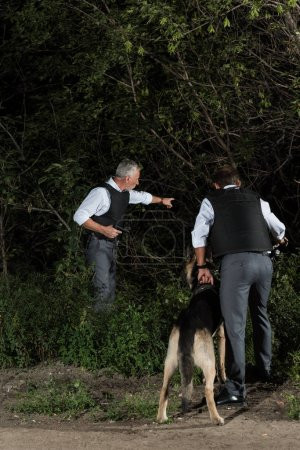mature policeman with gun pointing by finger to colleague with alsatian on leash near forest