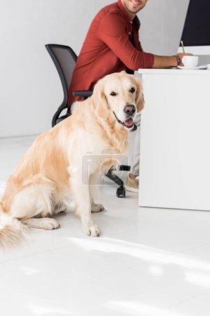 dog sitting on floor near businessman in office