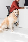 dog sitting on floor near businessman in office