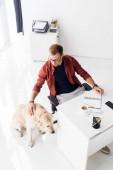 businessman stroking dog in modern office