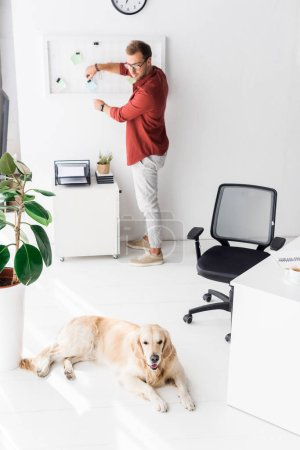 man working and looking at golden retriever dog lying on floor