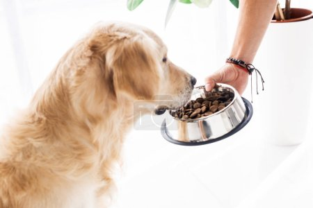 cropped view of man feeding funny golden retriever with dog food