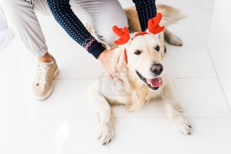 man in christmas sweater stroking golden retriever dog in christmas deer horns