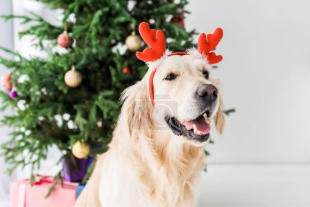 golden retriever with deer horns sitting next to christmas tree