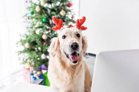Photo for Dog with deer horns sitting on chair in office with christmas tree, selective focus - Royalty Free Image