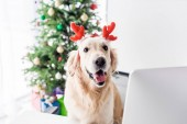 dog with deer horns sitting on chair in office with christmas tree, selective focus
