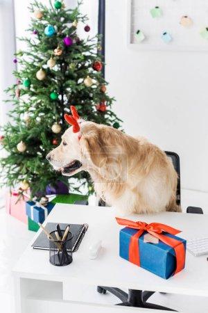 table objects festive happy holiday xmas