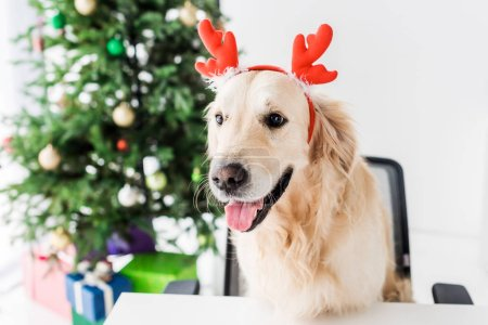 dog with deer horns sitting on chair, christmas tree on background