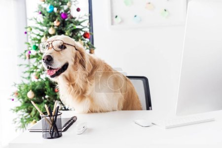 dog in glasses sitting on chair, christmas tree on background