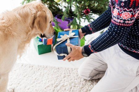 cropped view of man in giving christmas gift box to golden retriever