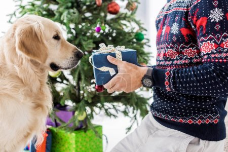 cropped view of man in christmas sweater giving present to golden retriever