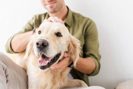 cropped view of man stroking golden retriever dog