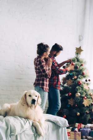 Photo for Selective focus of golden retriever sitting on bed while couple decorating christmas tree behind at home - Royalty Free Image
