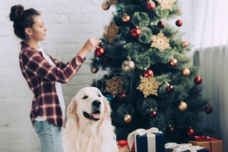 Photo for Selective focus of golden retriever and woman decorating christmas tree behind at home - Royalty Free Image
