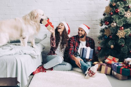 Photo for Laughing girl in santa hat putting present box in mouth of golden retriever while her boyfriend sitting near at home - Royalty Free Image