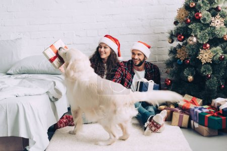 Photo for Golden retriever with gift box in mouth standing near happy couple in santa hats on christmas at home - Royalty Free Image