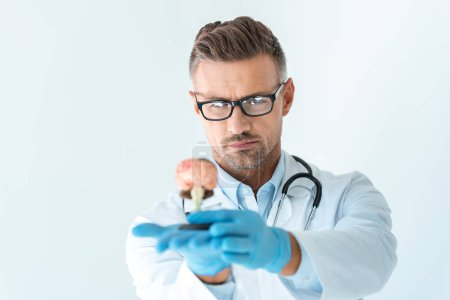 selective focus of handsome doctor looking at brain model isolated on white