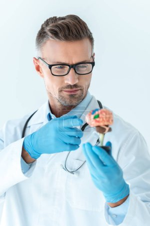 selective focus of handsome doctor pointing on brain model isolated on white