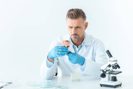 handsome scientist looking at brain model isolated on white