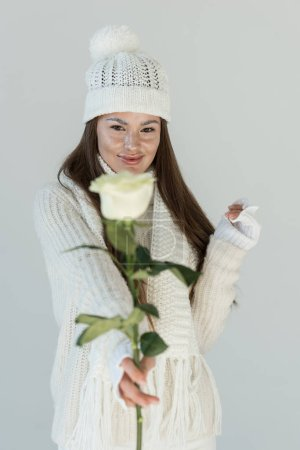 attractive woman in fashionable winter sweater and scarf showing white rose isolated on white