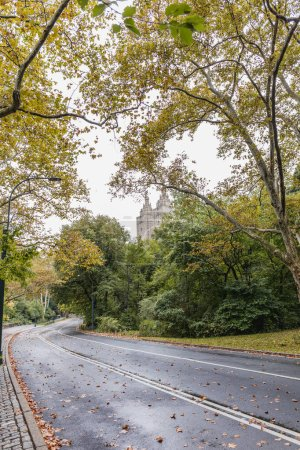 Photo for Scenic view of city park with green trees in new york, usa - Royalty Free Image