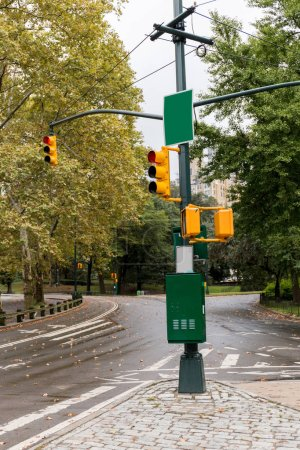 Photo for Urban scene with empty road, traffic lights and green trees in new york, usa - Royalty Free Image