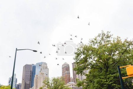 Photo for Urban scene with flying birds and trees in city park and skyscrapers in new york, usa - Royalty Free Image