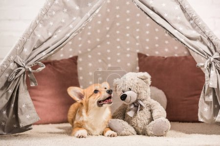 funny welsh corgi dog lying in wigwam with teddy bear at home