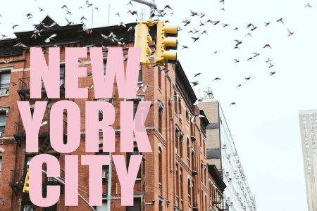 """Photo pour Scène urbaine avec des oiseaux volant au-dessus des bâtiments avec rose """"New York City"""" lettrage à New York, Etats-Unis - image libre de droit"""