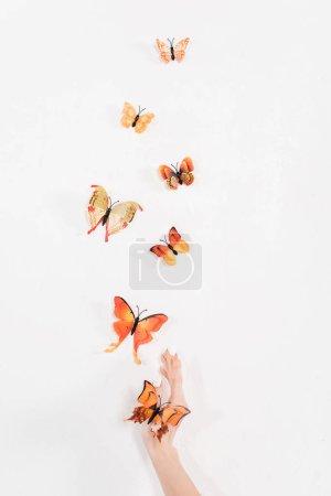 Photo pour Vue recadrée de la main près de papillons orange volant sur fond blanc, concept de sauvegarde de l'environnement - image libre de droit