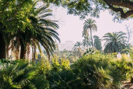 Photo pour Grands palmiers verts et buissons dans le parc de la ciutadella, Barcelone, Espagne - image libre de droit