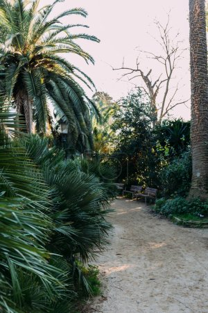 green trees and bushes, bunches and walking path in parc de la ciutadella, barcelona, spain
